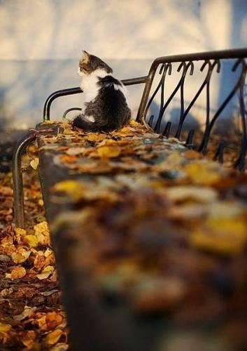 аватарка осень: