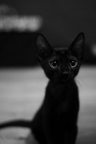 Котэ на аватарку вконтакте кот