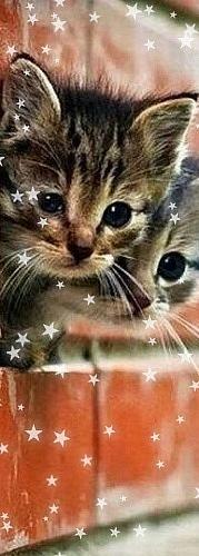 Аватарка для контакта кошки на аву