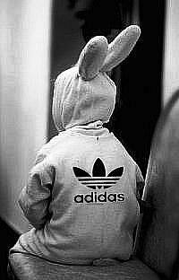 Кролик в адидасе на аву картинки