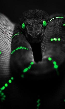 заставка на телефон змея № 57054 без смс