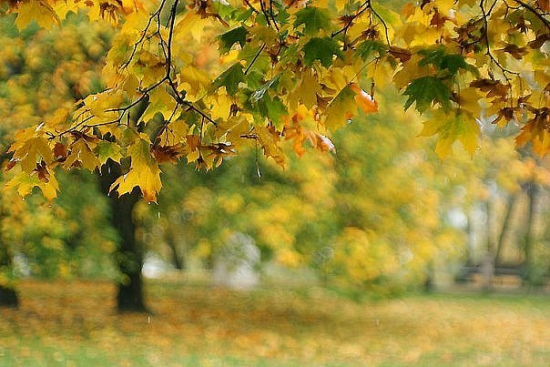 аватарки для форумов осень:
