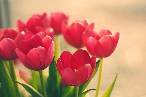 Аватарки цветов, бесплатные фото, обои ...: pictures11.ru/avatarki-cvetov.html